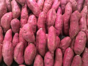 고구마 다이어트,효능 아열대 열대 지방에서는 1년 내내 시들지
