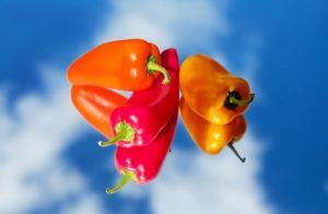 파프리카 손질과보관법,요리,효능은? 조리과정을 거치며 영양소가 파괴되는 과채류들과 달리 오히려 영양소를