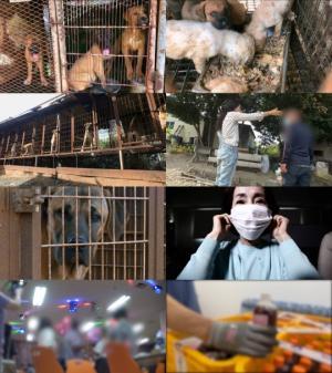 실화탐사대 계양산 개농장 둘러싼 비밀스러운 이야기 & 코로나19 이긴다는 수상한 훈련원의 정체